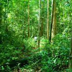 Tempat Wisata Hutan Kota Untan Di Kalimantan Barat
